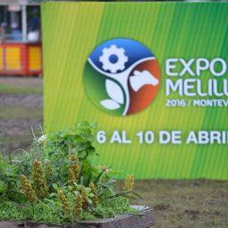 Fotos dia 1 - Expo Melilla 2016 (55)