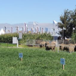 Fotos dia 2 - Expo Melilla 2016 (114)