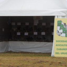 Expo Melilla 2017 - Día 2 (70)