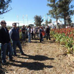 Expo Melilla 2017 - Dia 3 (84)
