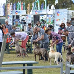 Expo Melilla 2017 - Dia 4 (22)
