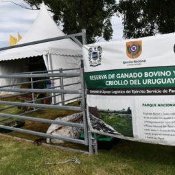 Día 2 - Expo Melilla 2018_098