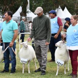 Día 3 - Expo Melilla 2018_053
