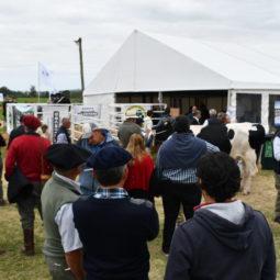 Día 3 - Expo Melilla 2018_136