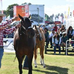 Día 4 - Expo Melilla 2018_085