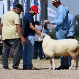 Expo Melilla 2019 - Día 1 (91)